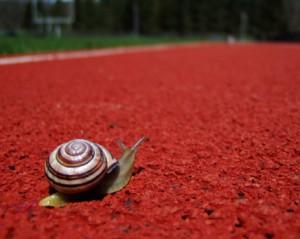the snail